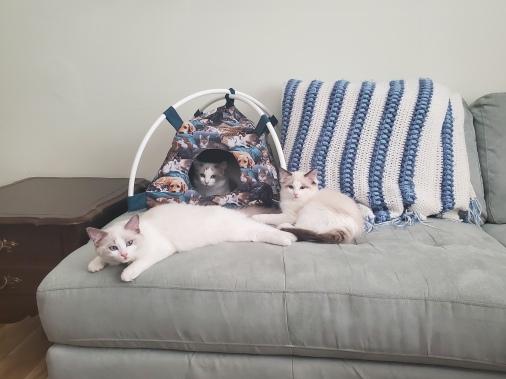 Floppy cats